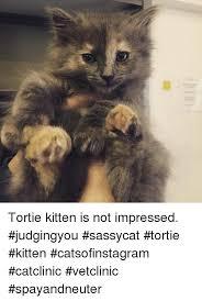 Sassy Cat Meme - tortie kitten is not impressed judgingyou sassycat tortie kitten