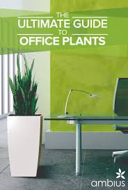 Succulents That Don T Need Light The Ultimate Guide To Office Plants