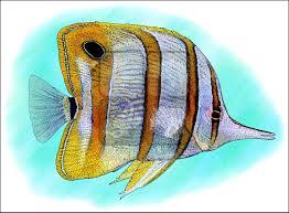 open ocean and coral reef fish full color u0026 line art