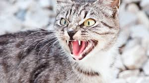 feral domestic cats are selfish and evil in my book improving