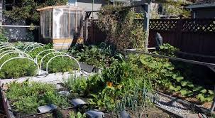 What Type Of Soil For Vegetable Garden - converting lawn into raised garden beds without waste