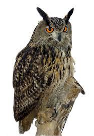 owl png transparent images free download clip art free clip