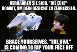 Brace Face Meme - brace yourselves the owl is coming to rip your face off true