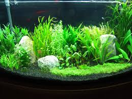 Best Substrate For Aquascaping The Best Tom Barr U0027s Low Tech Start Up Tank Method Easy To
