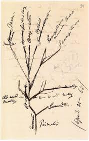charles darwin sketch of primates u0027 evolutionary tree 1868 ink