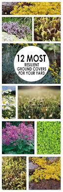 Backyard Ground Cover Ideas 20 Best Ground Cover Images On Pinterest Landscaping
