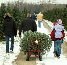 Christmas Tree Shopping Tips - xmas tree shop furniture decoration access