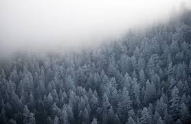 a blanket of fog envelops frosted trees in colorado