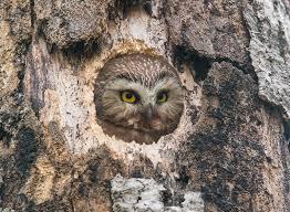 paulsundbergphotography photo keywords owl