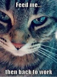 Herding Cats Meme - herding cats and row80 k b owen mystery writer