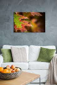 fall ladybug rogue aurora photography