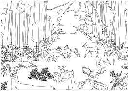does and fawns in forest by marion c animals coloring pages