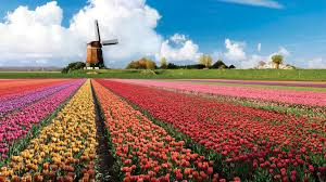 Netherlands Tulip Fields Keukenhof A Haven Of Tulips In Amsterdam The Netherlands
