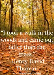 best 25 nature quotes ideas on in the woods
