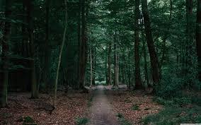 in the woods walking in the woods 4k hd desktop wallpaper for wide ultra