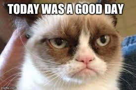 No Meme Grumpy Cat - good day grumpy cat know your meme