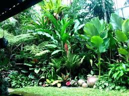 Small Tropical Garden Ideas Small Tropical Garden Tropical Small Garden Ideas Amazing Design 9