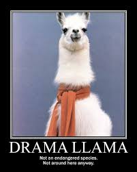 Llama Meme - meme drama llama google search funny quotes pinterest meme