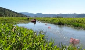 Wetland Resources Of Washington State by Scientists Dig Into Booming Coal Exports And Their Effects On