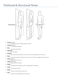 Planes And Anatomical Directions Worksheet Answers Exle About Directional Terms Anatomy And Physiology