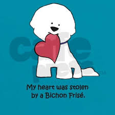 bichon frise names male best 25 bichon frise ideas on pinterest bichons baby maltese