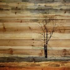 tree wood wall wood wall you ll wayfair