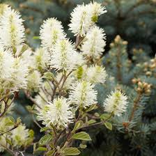 Flowering Shrubs That Like Full Sun - flowering shrubs by season