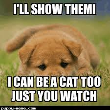 Dog Cat Meme - cat