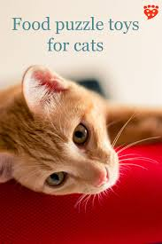companion animal psychology your cat would like food puzzle toys