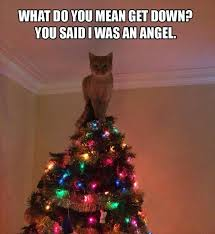 Cat Christmas Tree Meme - make me laugh wednesday cats versus christmas trees chris cannon