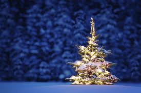 download christmas tree in snow wallpaper hd nature wallpaper