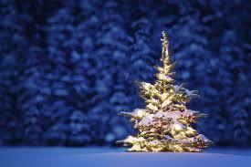 snow christmas tree learn easily flock your own christmas