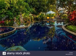 swimming pool hotel sawah lovina bungalows lovina beach bali