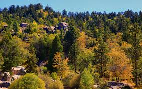 san bernardino mountains pick fall colors