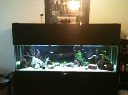 aquarium decorations ideas home design ideas