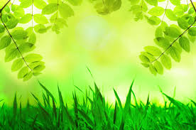 natural green background free stock photo public domain pictures