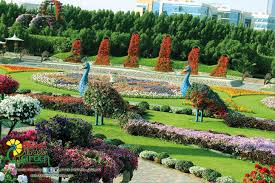 sights and attractions places of interest dubai miracle garden