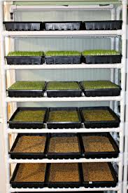 diy fodder system for animals u2022 the prairie homestead