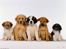 puppies wallpapers free download group 81
