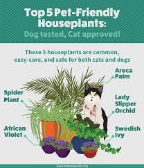cat friendly house plants 9985