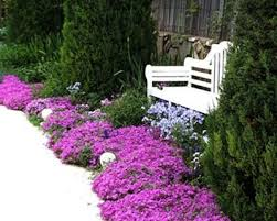 352 best garden worthy plants and flowers images on pinterest