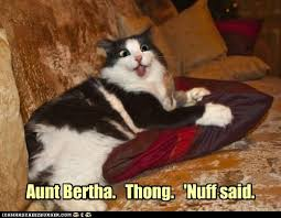 Thong Meme - animal capshunz thong funny animal pictures with captions