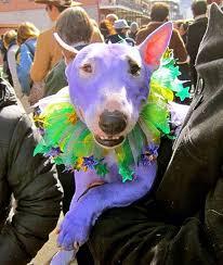 mardi gras pet collar fleurty mardi gras stripe garden flag mardi gras with the dogs