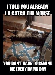 Mouse Memes - i told you already id catch the mouse cat meme