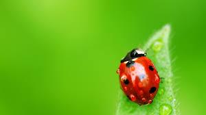 ladybug up close wallpaper 3954 1920 x 1200 wallpaperlayer com