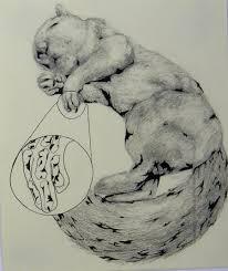 dead squirrel sketch by modernizedumbrella on deviantart