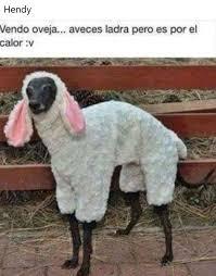 Alpaca Sheep Meme - necesita dinero meme by anderock memedroid