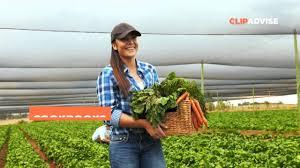year round indoor salad gardening how to grow nutrient dense