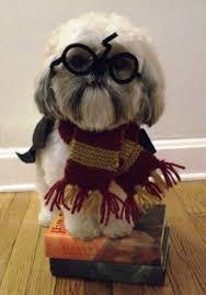 Ewok Dog Halloween Costume Harry Potter Small Dog Halloween Costumes Cute Dog Costumes