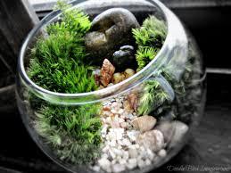 mini bowl terrarium with live moss already assembled ready